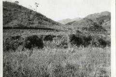 Estrada das Oliveiras