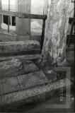 Vista da árvore